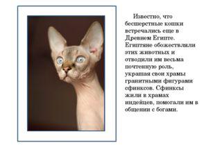 Известно, что бесшерстные кошки встречались еще в Древнем Египте. Египтяне о