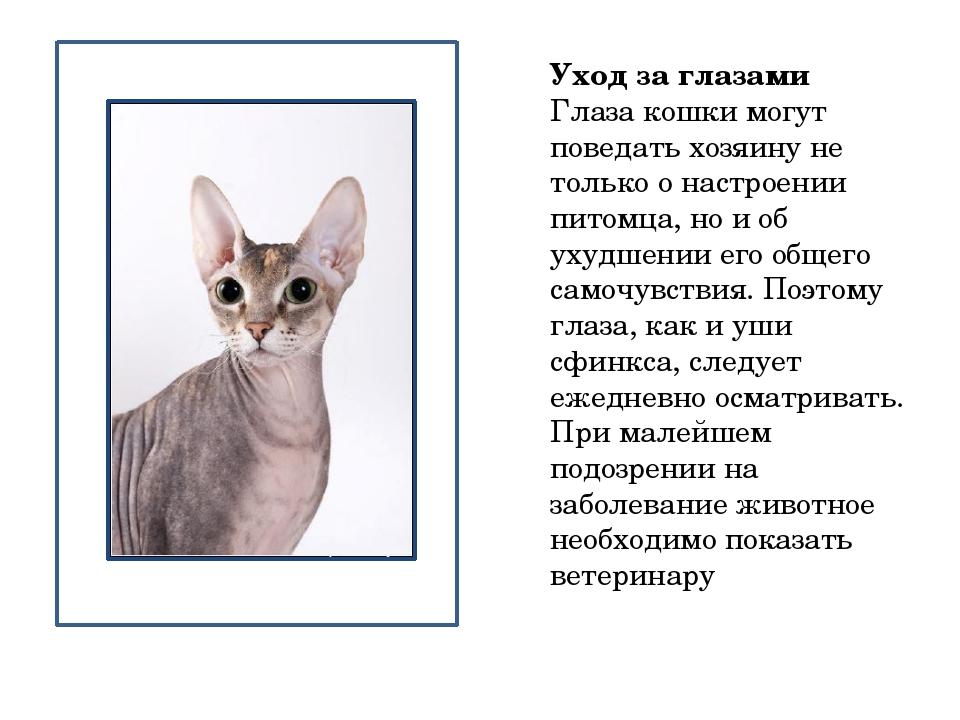 Уход за глазами Глаза кошки могут поведать хозяину не только о настроении пи...
