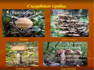 Съедобные грибы. Моховик Опята осенние Подберёзовик Подосиновики