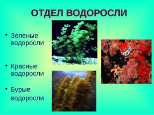 Зеленые водоросли Красные водоросли Бурые водоросли ОТДЕЛ ВОДОРОСЛИ