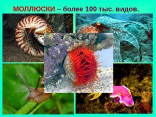МОЛЛЮСКИ – более 100 тыс. видов.