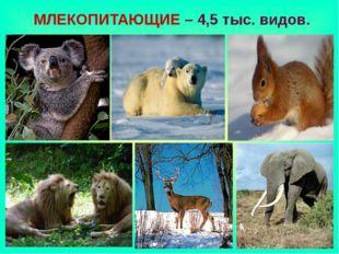 МЛЕКОПИТАЮЩИЕ – 4,5 тыс. видов.