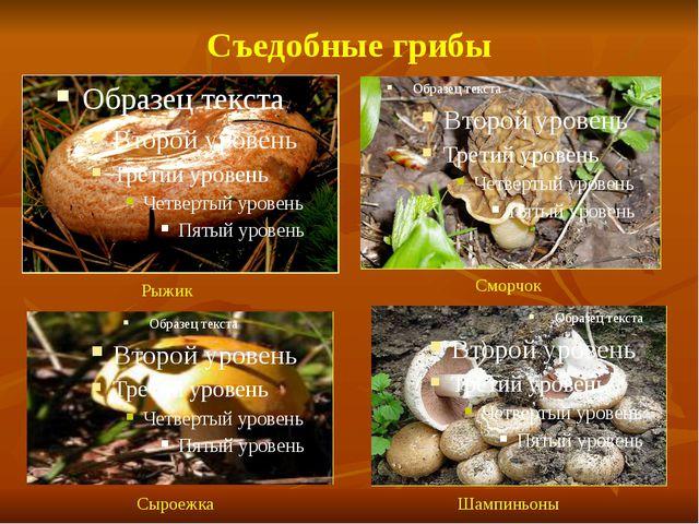 Съедобные грибы Рыжик Сморчок Сыроежка Шампиньоны
