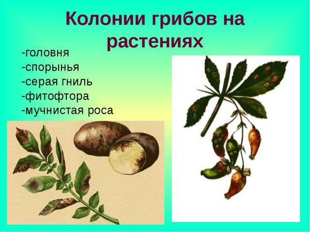 Колонии грибов на растениях -головня -спорынья -серая гниль -фитофтора -мучни...