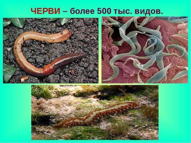 ЧЕРВИ – более 500 тыс. видов.