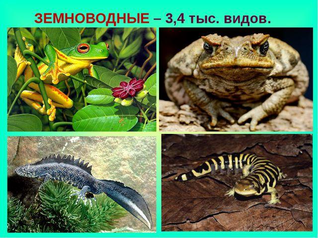 ЗЕМНОВОДНЫЕ – 3,4 тыс. видов.