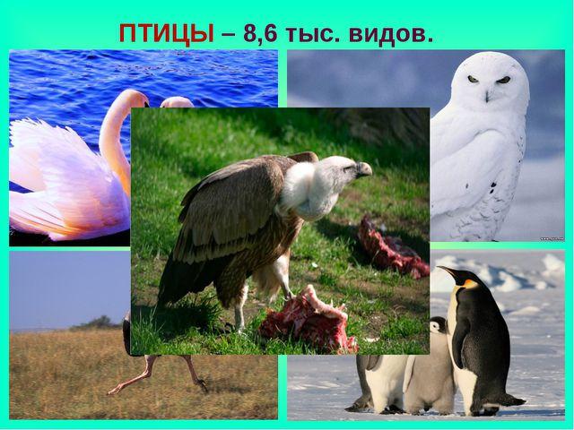 ПТИЦЫ – 8,6 тыс. видов.