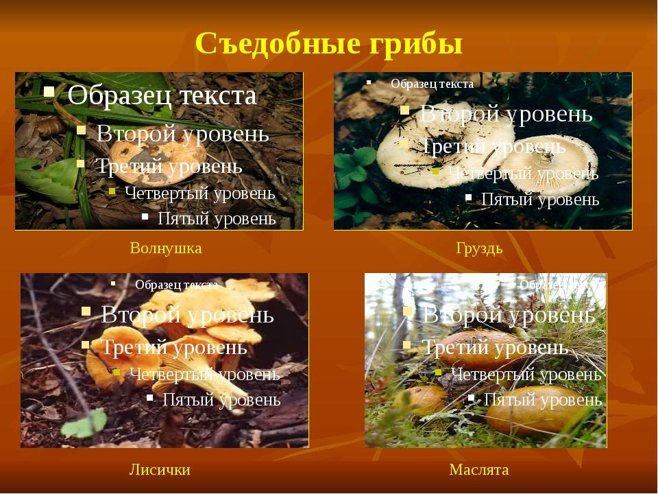 Съедобные грибы Волнушка Груздь Лисички Маслята
