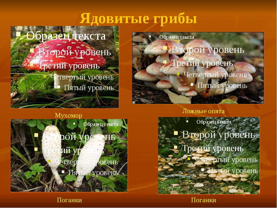 Ядовитые грибы Мухомор Ложные опята Поганки Поганки