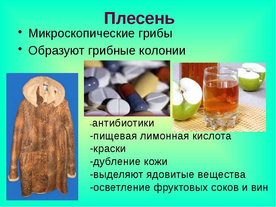 Плесень Микроскопические грибы Образуют грибные колонии -антибиотики -пищевая...