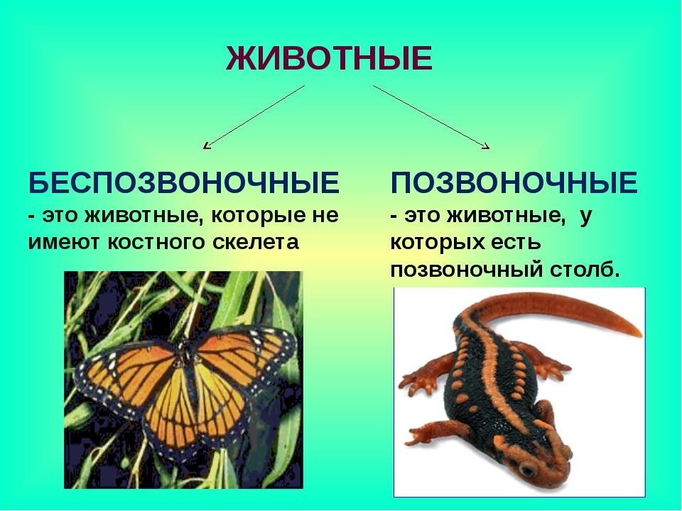 ЖИВОТНЫЕ БЕСПОЗВОНОЧНЫЕ - это животные, которые не имеют костного скелета ПОЗ...
