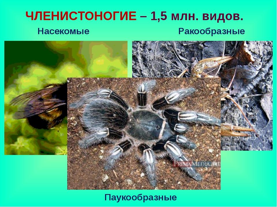 ЧЛЕНИСТОНОГИЕ – 1,5 млн. видов. Насекомые Ракообразные Паукообразные