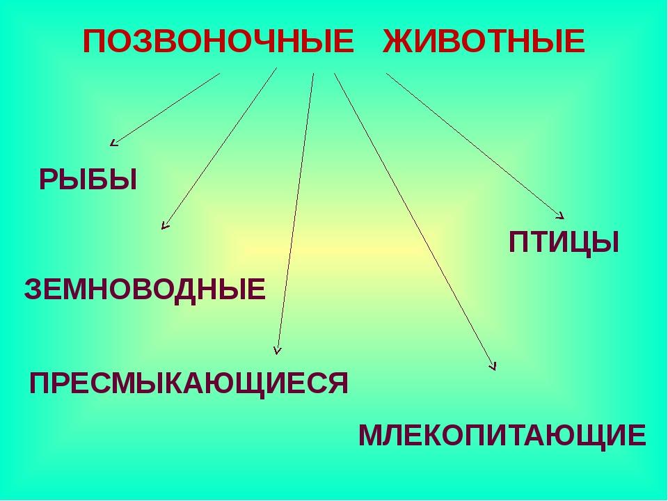 ПОЗВОНОЧНЫЕ ЖИВОТНЫЕ РЫБЫ ЗЕМНОВОДНЫЕ ПТИЦЫ ПРЕСМЫКАЮЩИЕСЯ МЛЕКОПИТАЮЩИЕ