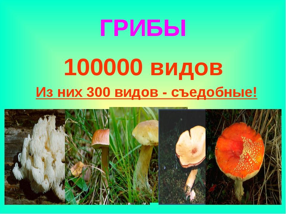 ГРИБЫ 100000 видов Из них 300 видов - съедобные!