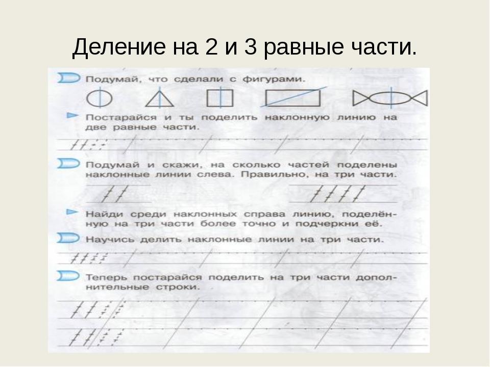 Деление на 2 и 3 равные части.