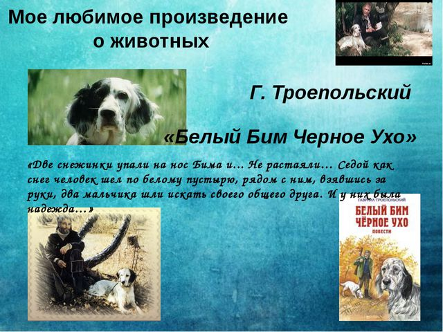 Мое любимое произведение о животных Г. Троепольский «Белый Бим Черное Ухо» «Д...
