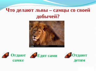 Что делают львы – самцы со своей добычей? Отдают самке Едят сами Отдают детям