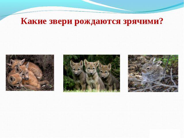 Какие звери рождаются зрячими?