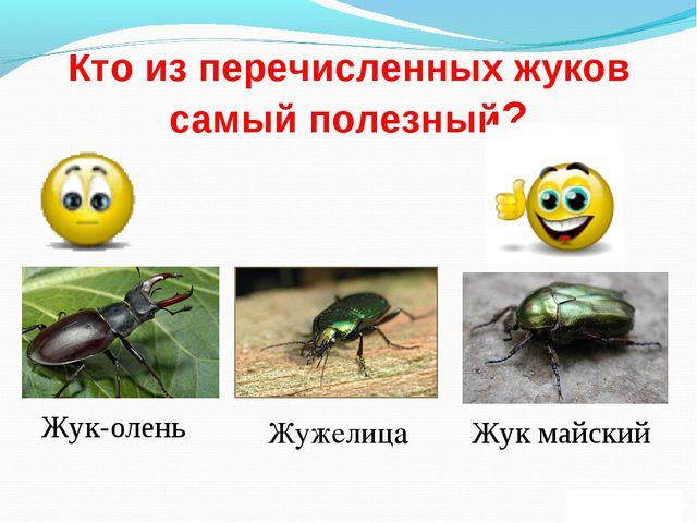Кто из перечисленных жуков самый полезный? Жук-олень Жук майский Жужелица