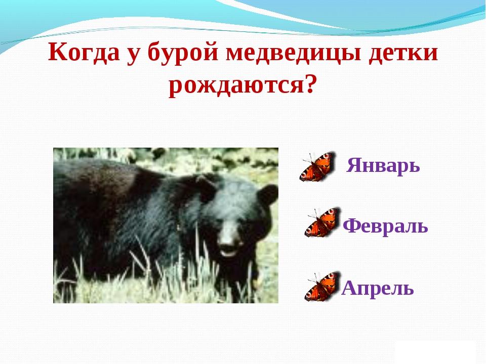 Когда у бурой медведицы детки рождаются? Январь Февраль Апрель