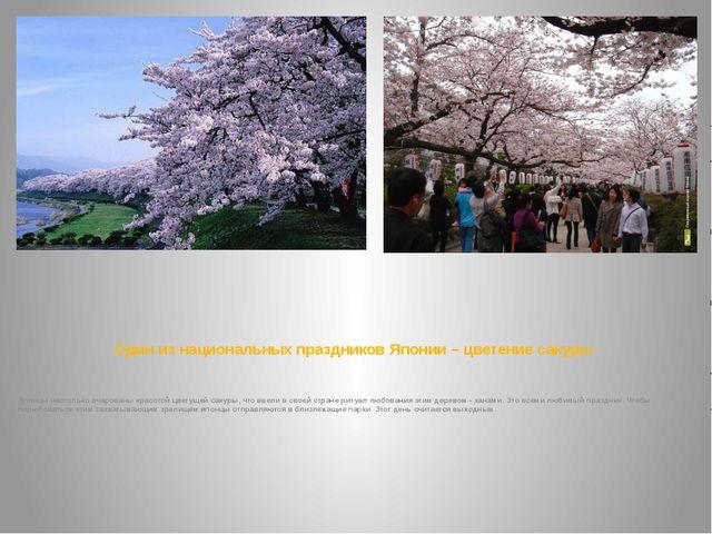 Один из национальных праздников Японии – цветение сакуры Японцы настолько оча...