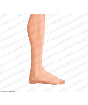 leg-foot-lateral-view-skin-men.jpg