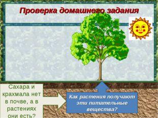 Сахара и крахмала нет в почве, а в растениях они есть? Как растения получают