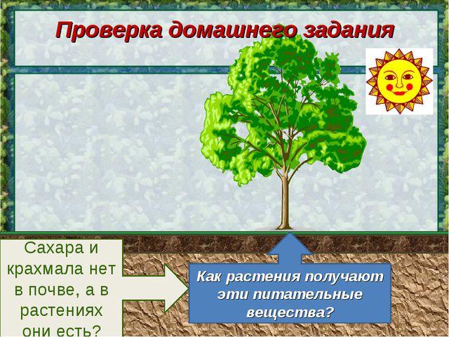 Сахара и крахмала нет в почве, а в растениях они есть? Как растения получают...