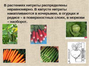 В растениях нитраты распределены неравномерно. В капусте нитраты накапливаютс