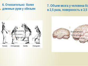 6. Относительно более длинные руки у обезьян 7. Объем мозга у человека больше