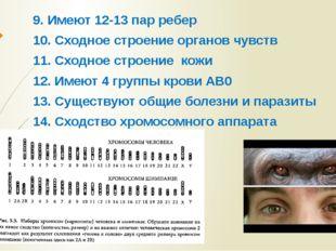 9. Имеют 12-13 пар ребер 10. Сходное строение органов чувств 11. Сходное стро