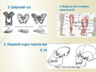 3. Широкий таз 5. Лицевой отдел черепа меньше мозгового. 6. Нет надбровных ду