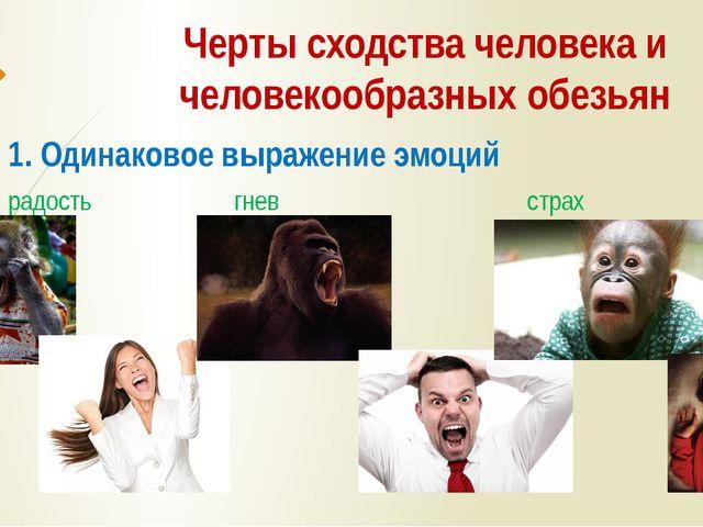 Черты сходства человека и человекообразных обезьян 1. Одинаковое выражение эм...