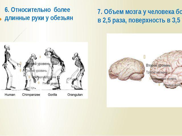 6. Относительно более длинные руки у обезьян 7. Объем мозга у человека больше...