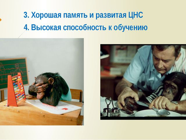 3. Хорошая память и развитая ЦНС 4. Высокая способность к обучению