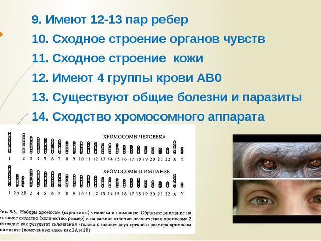 9. Имеют 12-13 пар ребер 10. Сходное строение органов чувств 11. Сходное стро...