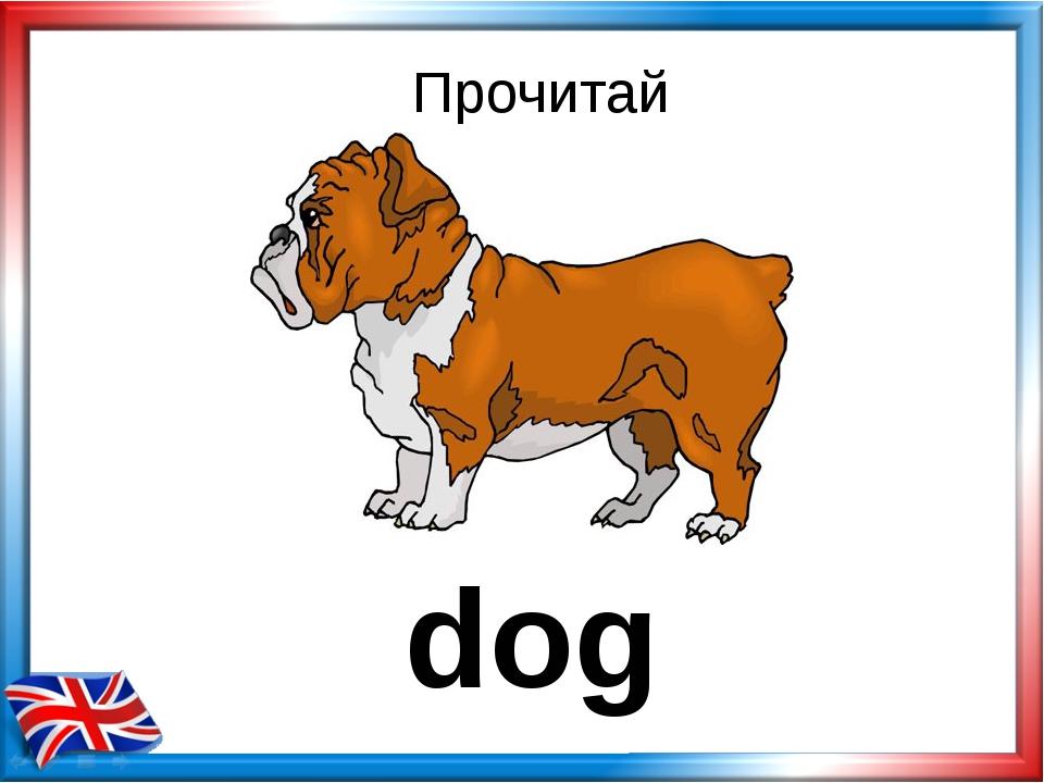 Прочитай dog