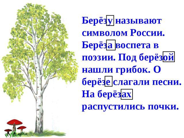 Берёзу называют символом России. Берёза воспета в поэзии. Под берёзой нашли г...