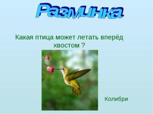 Какая птица может летать вперёд хвостом ? Колибри
