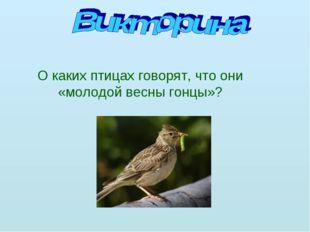 О каких птицах говорят, что они «молодой весны гонцы»?