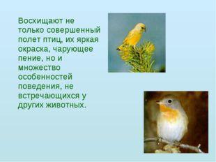 Восхищают не только совершенный полет птиц, их яркая окраска, чарующее пение
