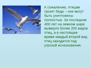 К сожалению, птицам грозит беда – они могут быть уничтожены полностью. За пос