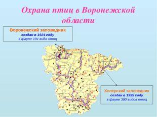 Охрана птиц в Воронежской области Воронежский заповедник создан в 1924 году в