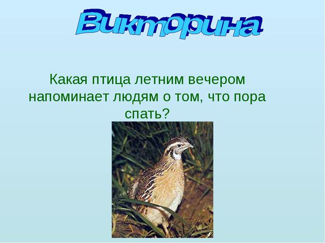 Какая птица летним вечером напоминает людям о том, что пора спать?