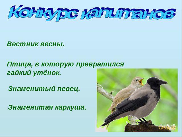 Вестник весны. Птица, в которую превратился гадкий утёнок. Знаменитый певец....