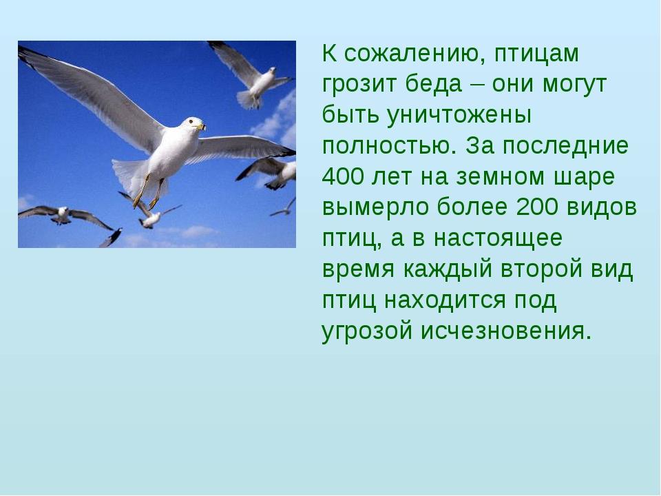 К сожалению, птицам грозит беда – они могут быть уничтожены полностью. За пос...