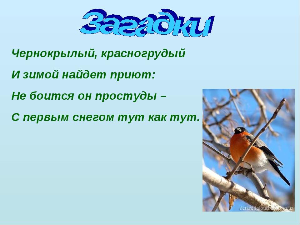 Чернокрылый, красногрудый И зимой найдет приют: Не боится он простуды – С пер...