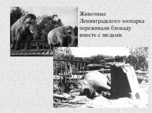 Животные Ленинградского зоопарка переживали блокаду вместе с людьми