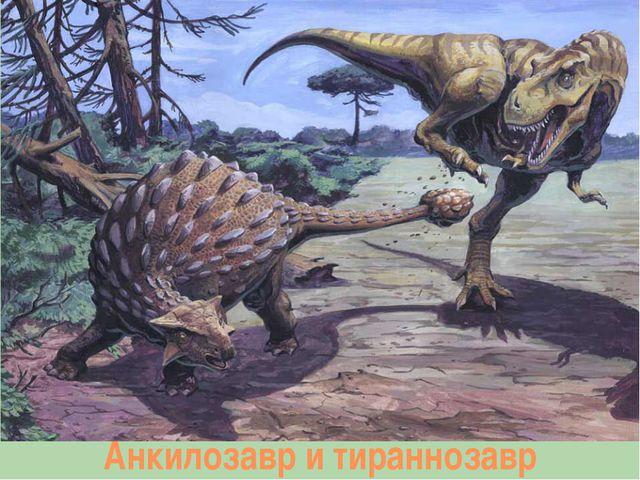 Анкилозавр и тираннозавр