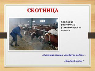 """СКОТНИЦА «Вредный воздух"""" Скотница – работница, ухаживающая за скотом. «Скотн"""